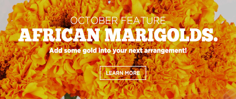 the Featured Product - African Marygold of the month October.