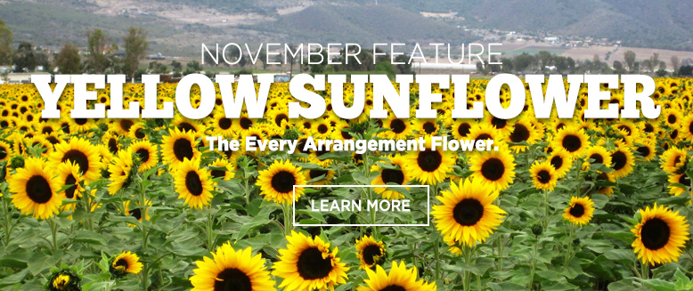 the Featured Product - Sunflowers of the month October.