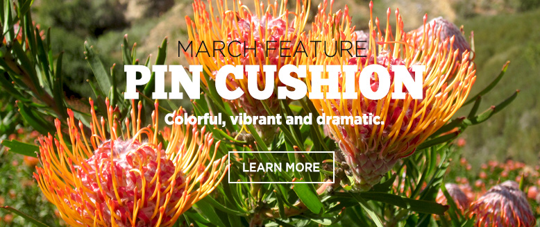 Check the Featured Product - Pin Cushion of the month March.