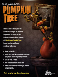 The Amazing Pumpkin Tree